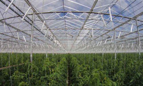 ฟาร์มในอนาคต เทคโนโลยีแหล่งอาหาร ที่ล้ำยุค เพื่อหล่อเลี้ยงชีวิตเพื่อนร่วมโลก