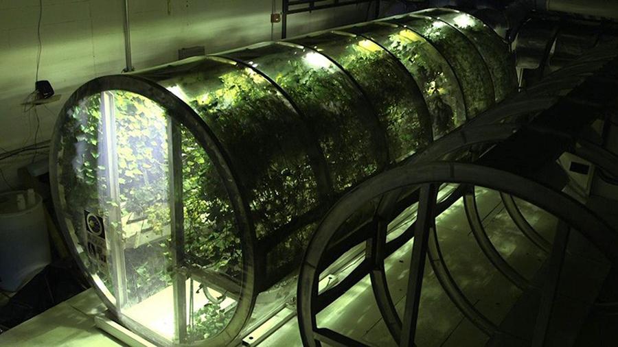 เทคโนโลยี ไร้แรงโน้มถ่วงนอกโลก-ปลูกพืช