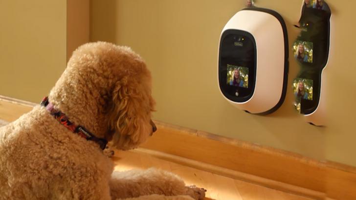 เจ้านานหมดความกังวลใจ เทคโนโลยีกับสัตว์เลี้ยง